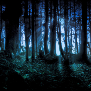 Forest @ Night (Shadows only).jpg